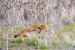 coyote-5547-50898277643-o
